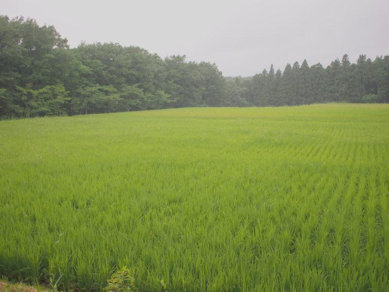 リゾナーレ那須の田んぼ風景