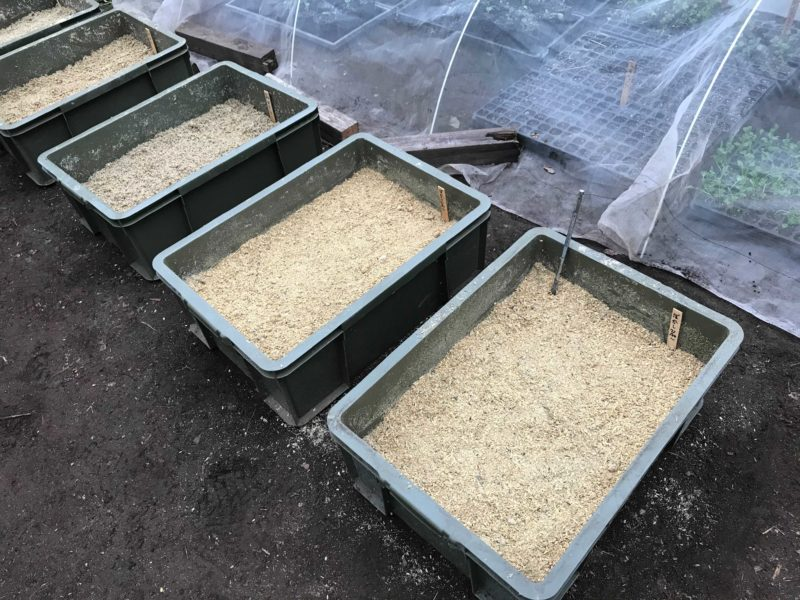 ぼかし肥料が並べられている様子